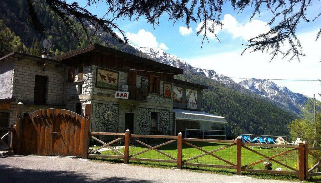 stella alpina valle