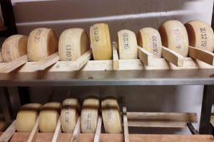 Forme di formaggio della Valsaviore