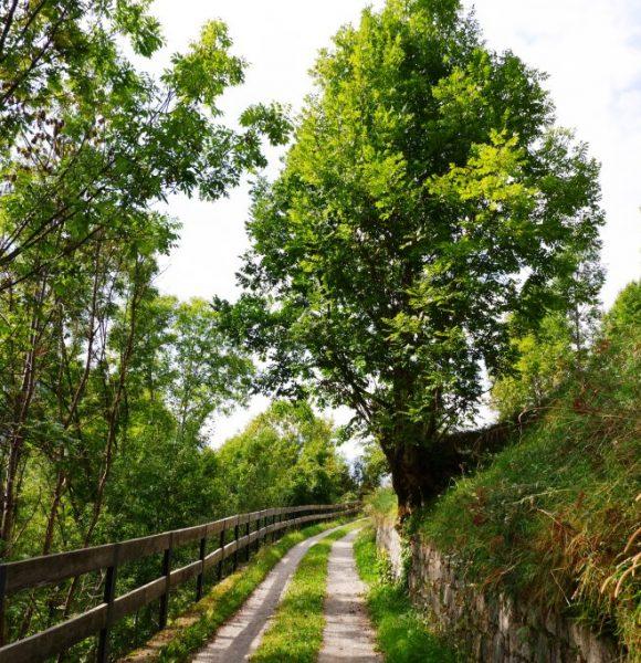 Un tratto di percorso su strada bianca, circondato da prati e alberi latifoglie