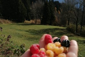 Piccoli frutti al sole della Valsaviore