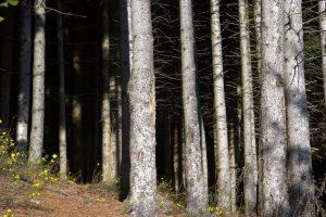 I tronchi regnano sovrani al margine della Via dei Maggenghi