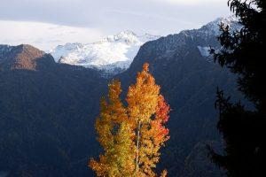 La neve delle cime incontra la veste autunnale degli alberi