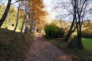 Il tratto di strada uscendo dalla pineta
