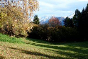 Prati verdi e betulle dorate lungo la Via dei Maggenghi