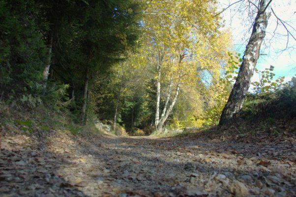 Il fondo della Via dei Maggenghi ricoperto di foglie autunnali
