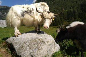 Azienda agricola il Ginepro